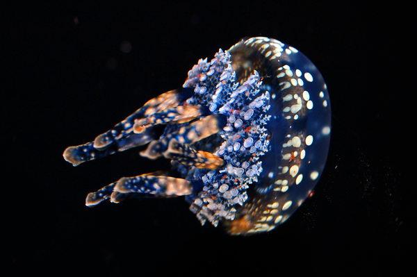 Очеровательные морские медузы