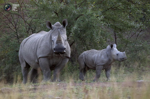 Истребление браконьерами диких и экзотических животных